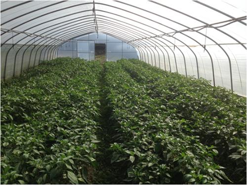 蔬菜大棚种植基地